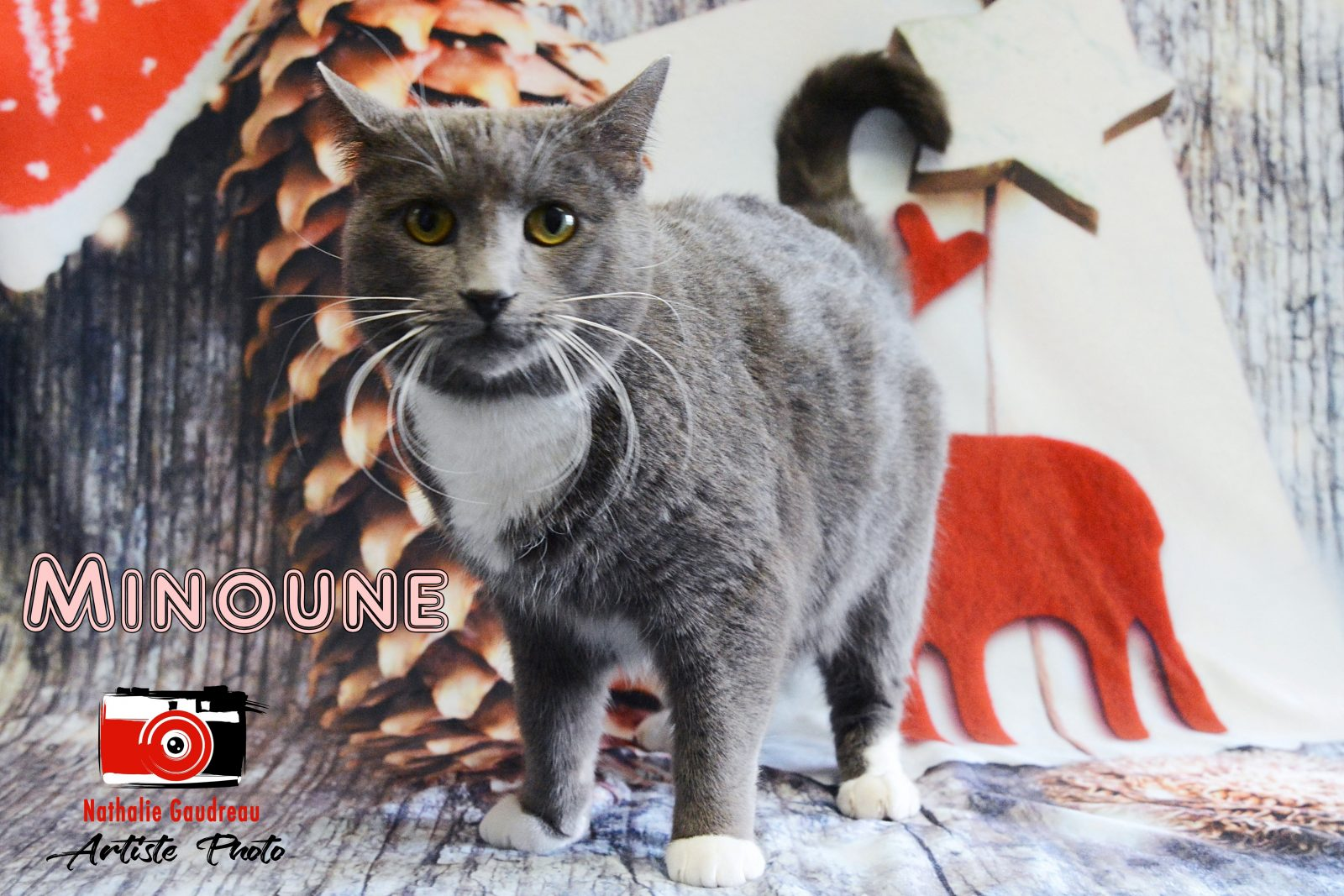 Adopter un chat adulte